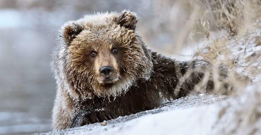 Какая будет зима 2022 года в Сибири